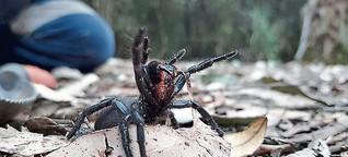 DPA Kindernachrichten: Giftige Spinnen mitten in der Stadt