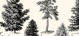 Darmstadt, Deine Wälder: Unsere Bäume und der Klimawandel