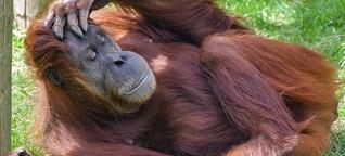 """Ein """"Tinder"""" für Zootiere rettet gefährdete Arten vor dem Aussterben"""