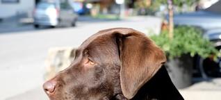 Parasit macht Hundegeruch für Mücken attraktiver