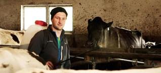 Effektive Mikroorganismen: Besser für Kuhstall und Boden?