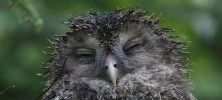 Der Schlaf der Vögel
