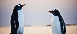 """""""Der größte Feind des Pinguins? Das sind wir"""""""