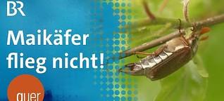 Käfer gegen Bauern | quer vom BR