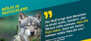 Der Wolf muss nicht unser Freund sein – und dafür braucht er Platz (MDR WISSEN)
