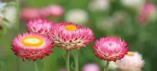 AMO - Ich liebe die Blumen