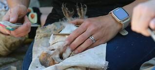 Gefährdete Artenvielfalt (Teil 3): Schleiereulen als Botschafter für die Artenvielfalt