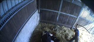 Anwohnerin erkennt Tier-Schläger auf Video