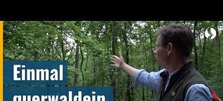 Querwaldein statt auf dem Weg - Wie ein Wald schöpfungsfreundlich gestaltet werden kann