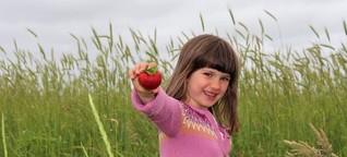 Erdbeersaison ist gestartet: Sylts einziger Anbauer von Bio-Erdbeeren kämpft gegen Preisdumping   shz.de