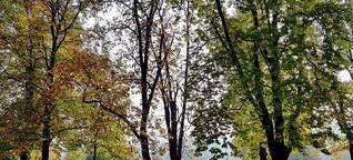 ☼ Wetterprognose Oktober-Vollmond 2018 – Nachtfrost