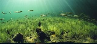 Lunz als Labor: Öko-Beziehungen vor Ort erkennen